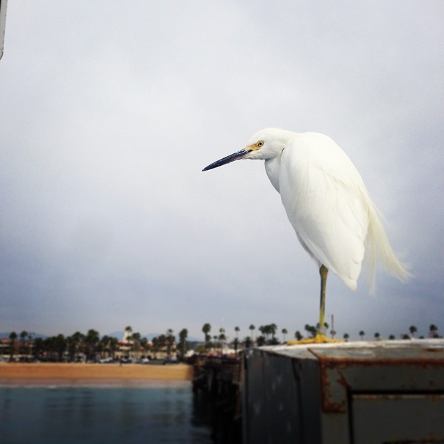 #egret #portraiture